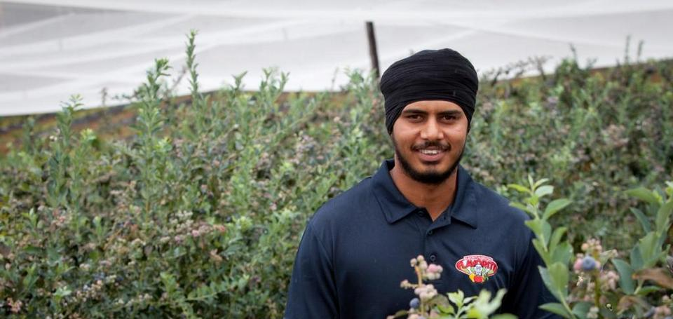 Norco Helping Local Blueberry Farmers Out